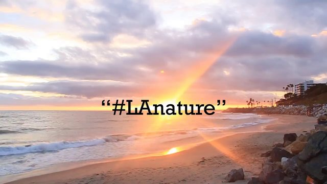 #LANATURE by Julian Brummitt & Keelin S. Clark